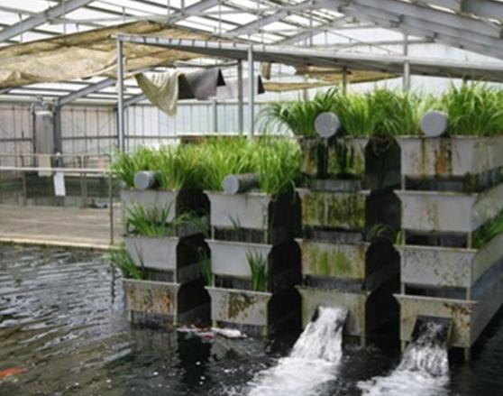 Filter biologis dengan tanaman