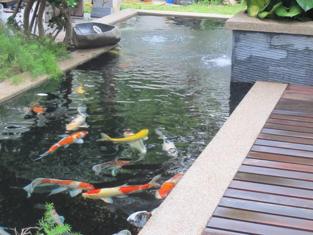 Gambar contoh desain kolam koi dekat dengan teras rumah