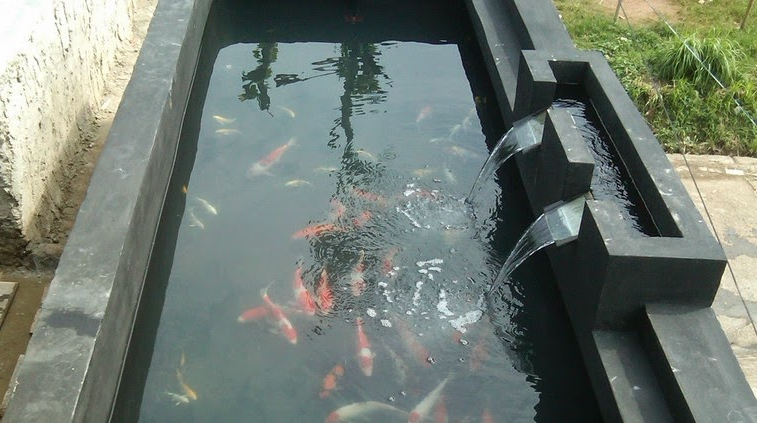 Warna cat dinding kolam koi