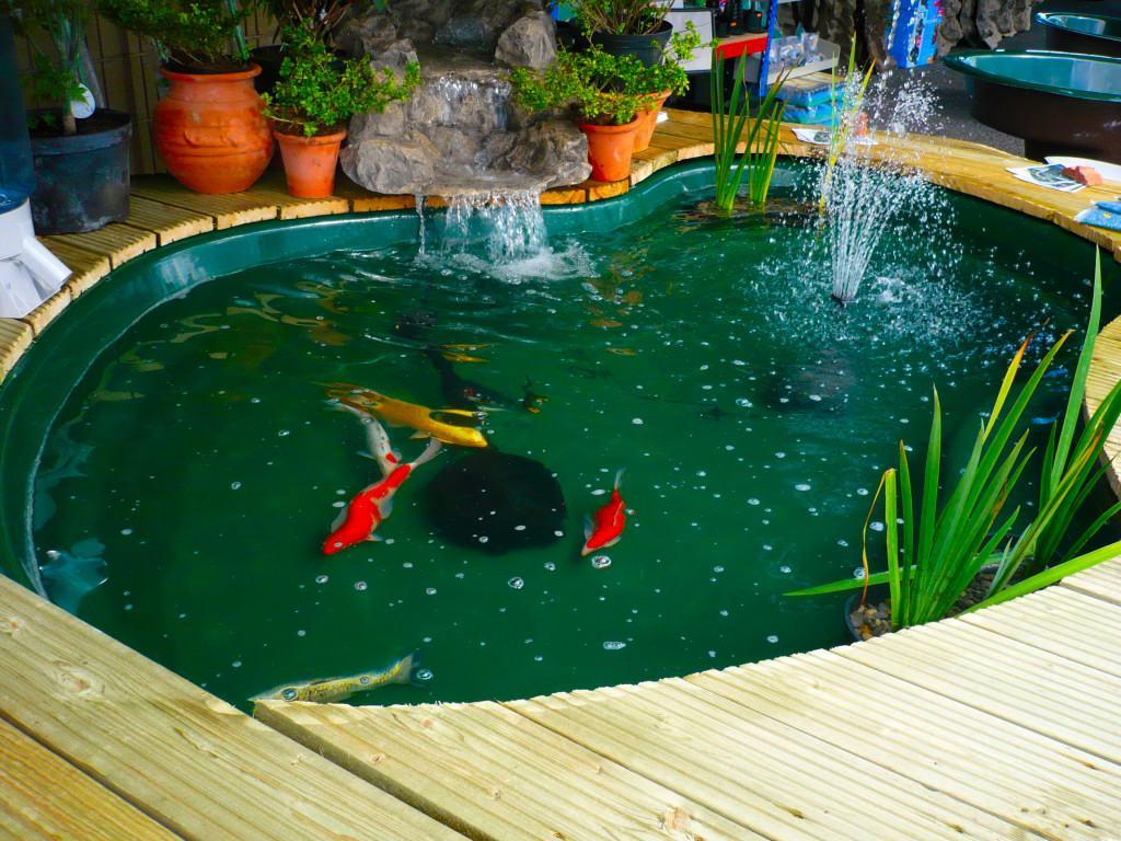 Contoh desain kolam ikan koi terkesan modern di taman teras dekat  rumah